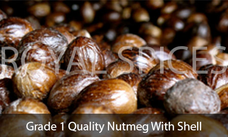 Grade 1 Quality Nutmeg With Shell