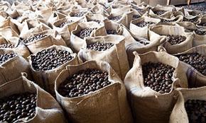Nutmeg Ready Stock from Srilanka