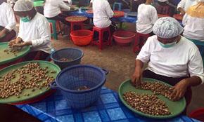 Nutmeg Hand Sorting