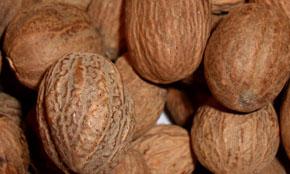 Srilanka Nutmeg
